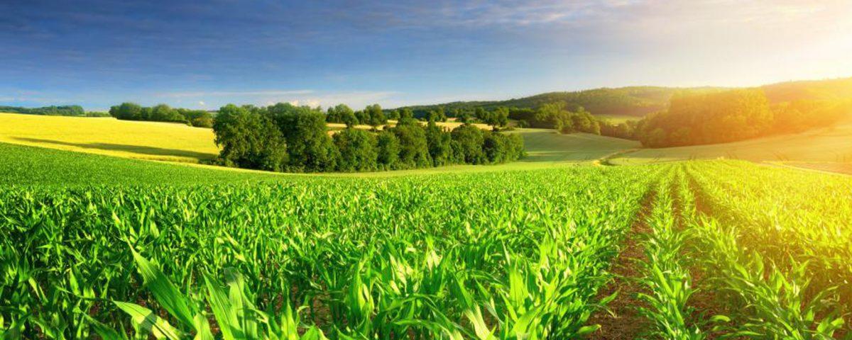 Mekn s tiendra ses 9e assises de l agriculture siam for L agriculture