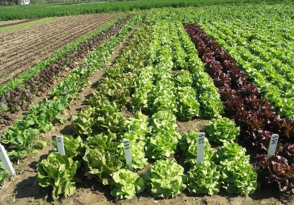 L'Institut national de la recherche agronomique (INRA) a noué un partenariat avec la société SOWIT, une entreprise spécialisée dans l'utilisa